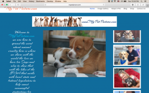 Pet Loves Blog and Social Website
